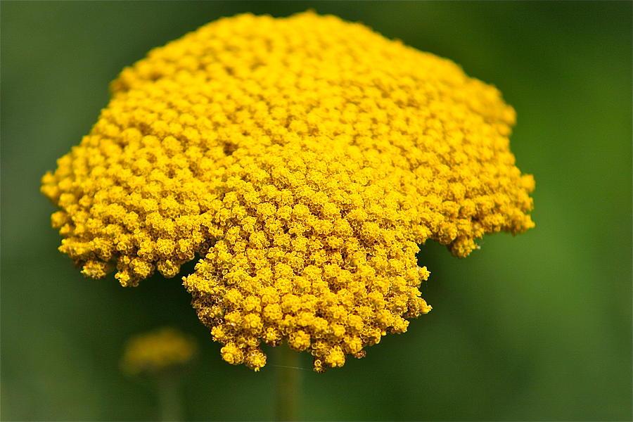 Flower Photograph - Yellow Flower by Robert Joseph