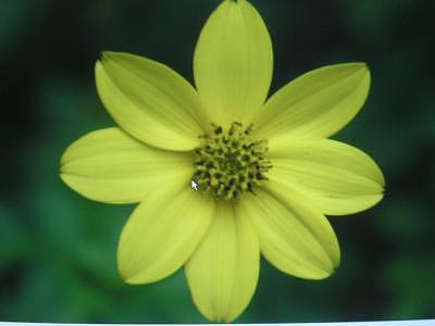 Yellow Flower Photograph - Yellow Flower by Taylor Foss