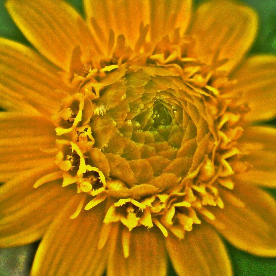 Flower Digital Art - Yellow flower2 by Kumiko Izumi