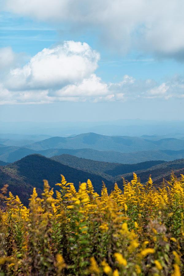 Blue Ridge Mountain Photograph - Yellow flowers along the Blue Ridge Mountains by Kim Fearheiley