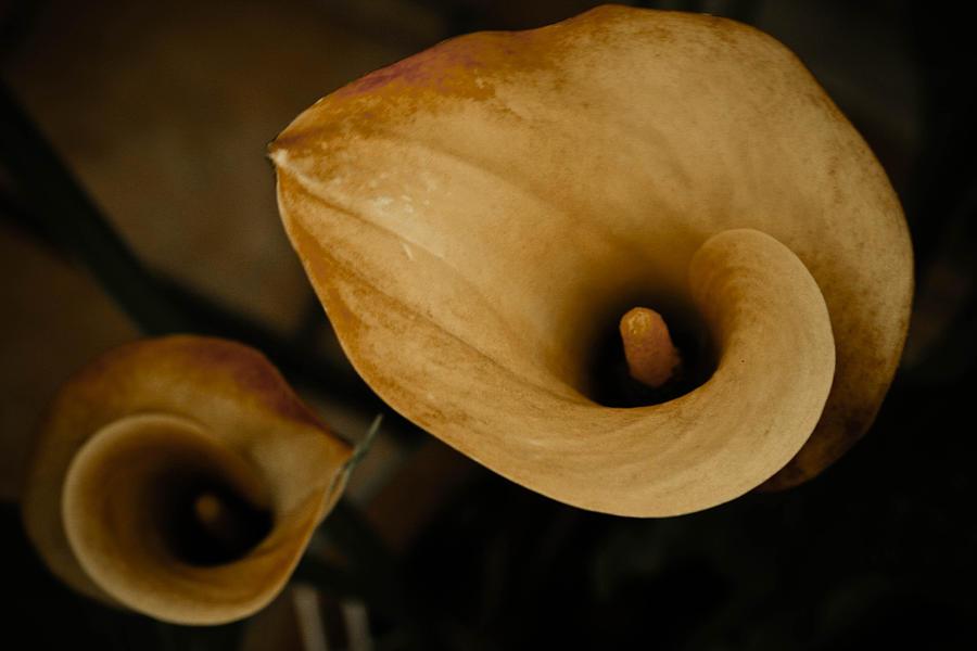 Flowers Photograph - Yellow Flowers by Marta Grabska