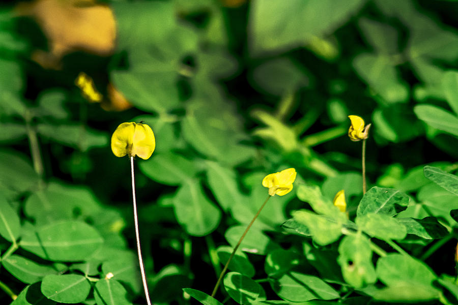 Flor Photograph - Yellow Flowers by Totto Ponce