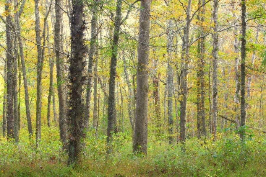 Yellow Forrest by Angela Comperry