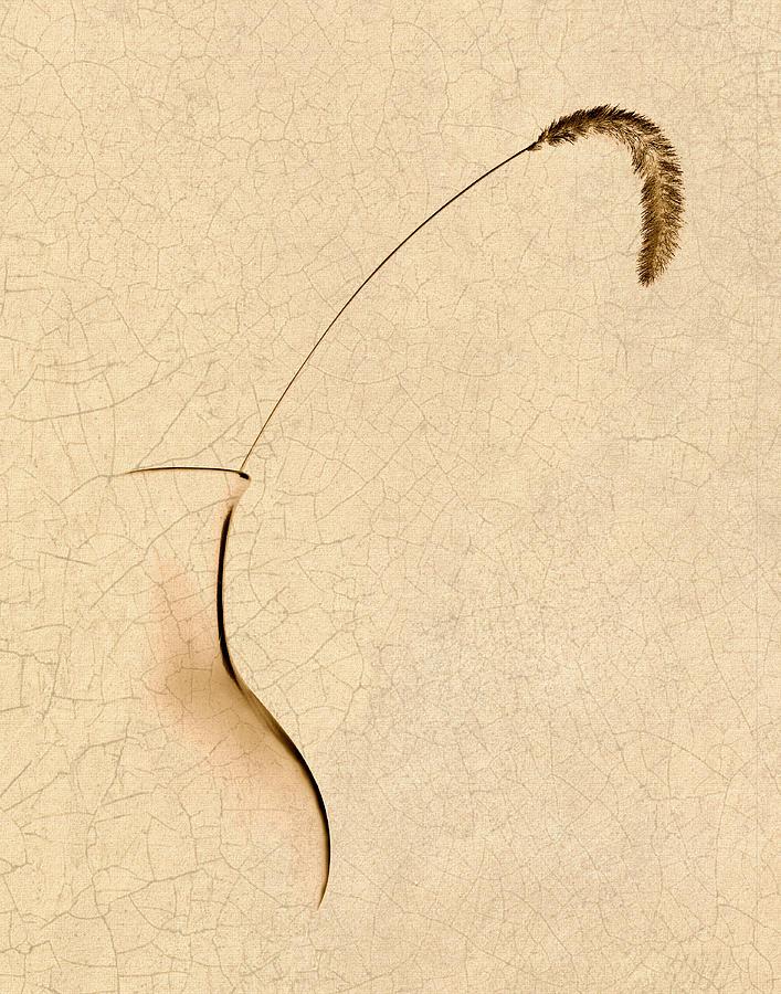 Foxtail Photograph - Yellow Foxtail Still Life by Tom Mc Nemar