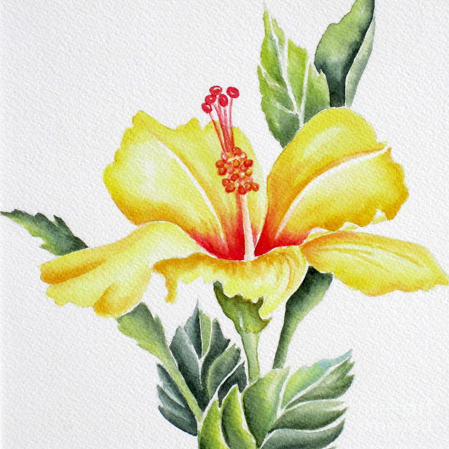 Yellow Hibiscus Painting By Deborah Ronglien