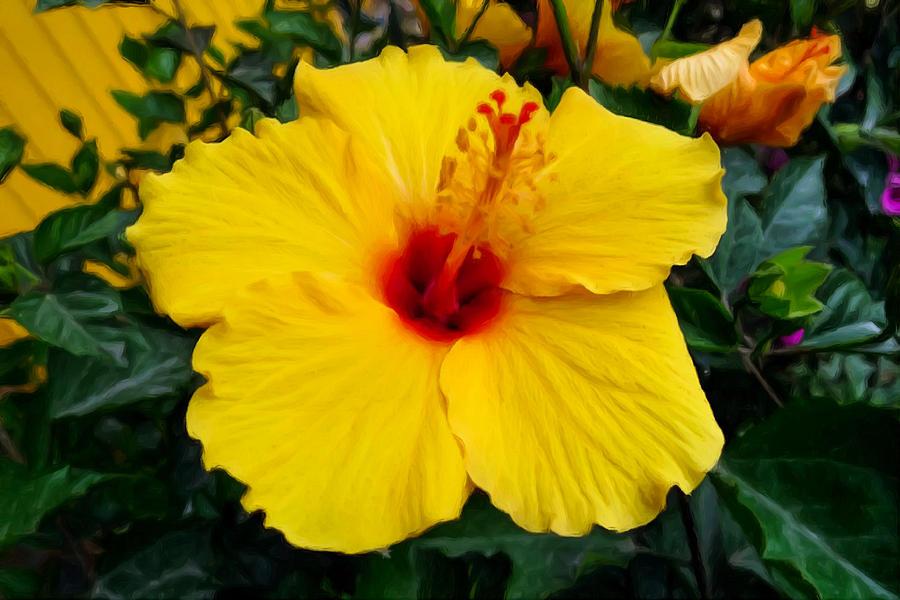 Yellow Hibiscus Flower 3 Painting by Jeelan Clark