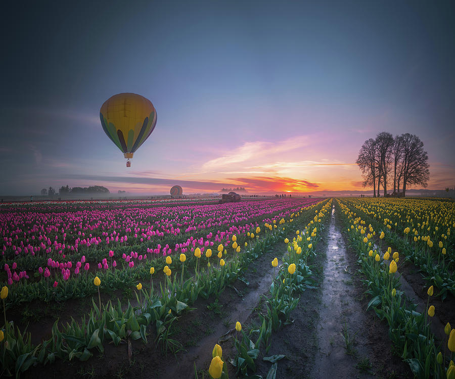 Travel Photograph - Yellow Hot Air Balloon Over Tulip Field In The Morning Tranquili by William Freebilly photography