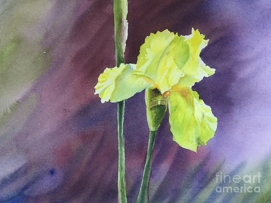 Yellow Iris Painting - Yellow Iris by Yohana Knobloch