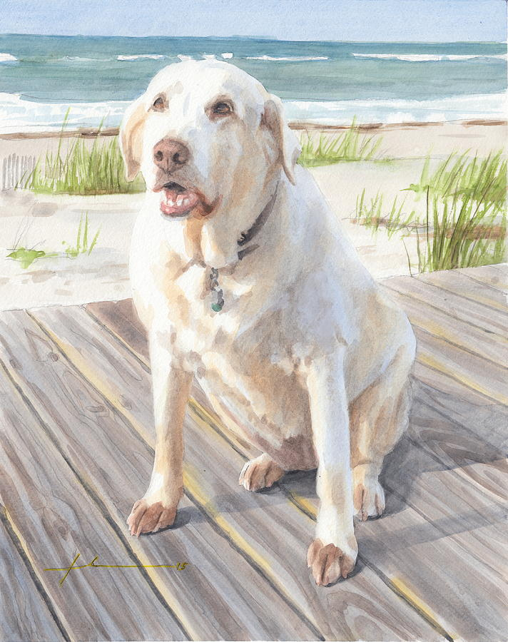 Yellow Lab On Boardwalk Drawing by Mike Theuer