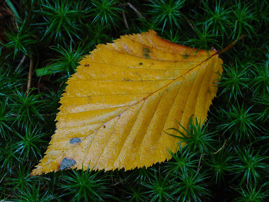 Autumn Photograph - Yellow Leaf by Juergen Roth