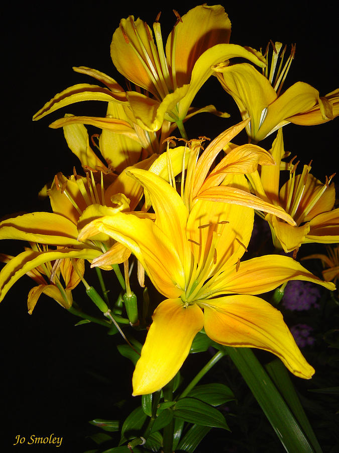 Flowers Photograph - Yellow Lilies by Joanne Smoley