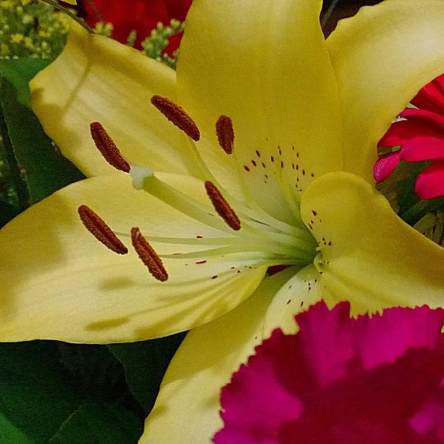 Plants Photograph - #yellow #lily Detail. Love The Pollen by Shari Warren