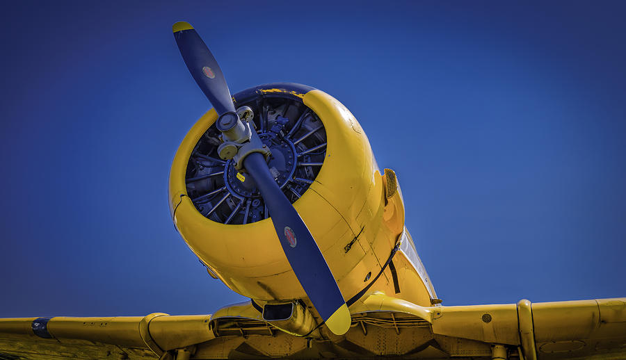 Yellow on Blue Static by Jorge Perez - BlueBeardImagery