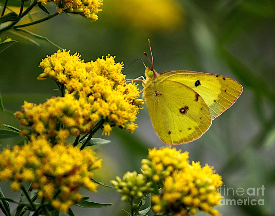Nature Artwork Photograph - Yellow On Yellow by Robert Pearson