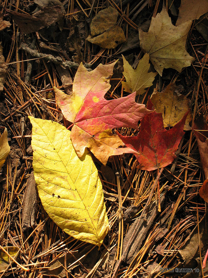 Fall Leaves Photograph - Yellow Orange And Red by Garth Glazier