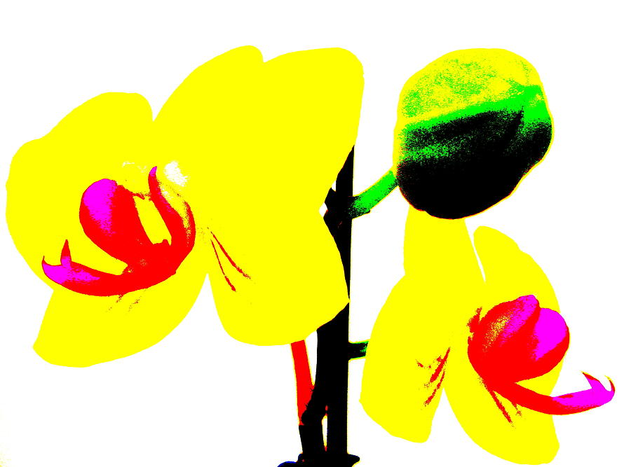 Yellow Flowers Photograph - Yellow Orchids Abstract by Beth Akerman