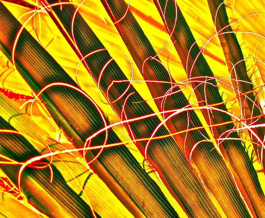 Photograph Photograph - Yellow Palm Fun by Gwyn Newcombe