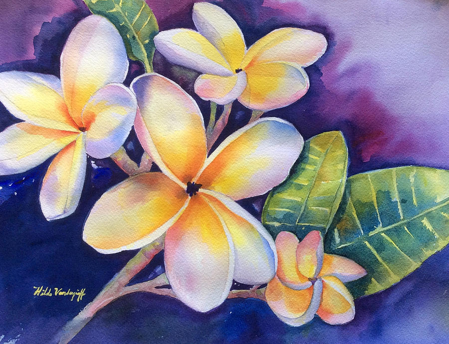 Yellow Plumeria Flowers by Hilda Vandergriff