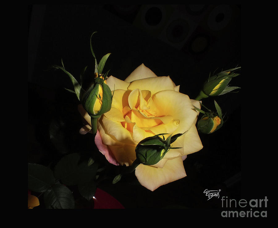 Yellow Rose at Midnight by GG Burns