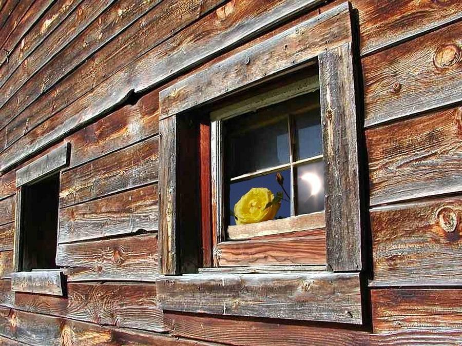Barn Digital Art - Yellow Rose Eclipse by Tim Allen