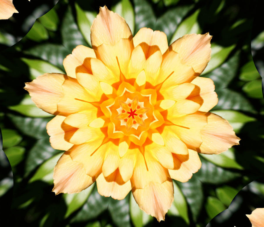 Flowers Photograph - Yellow Rose Kaleidoscope  by Cathie Tyler