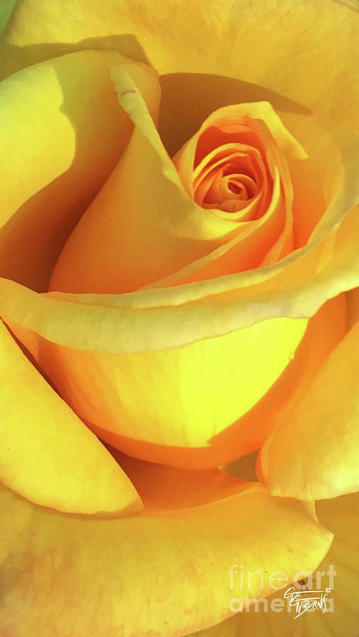 Yellow Rose Upclose by GG Burns