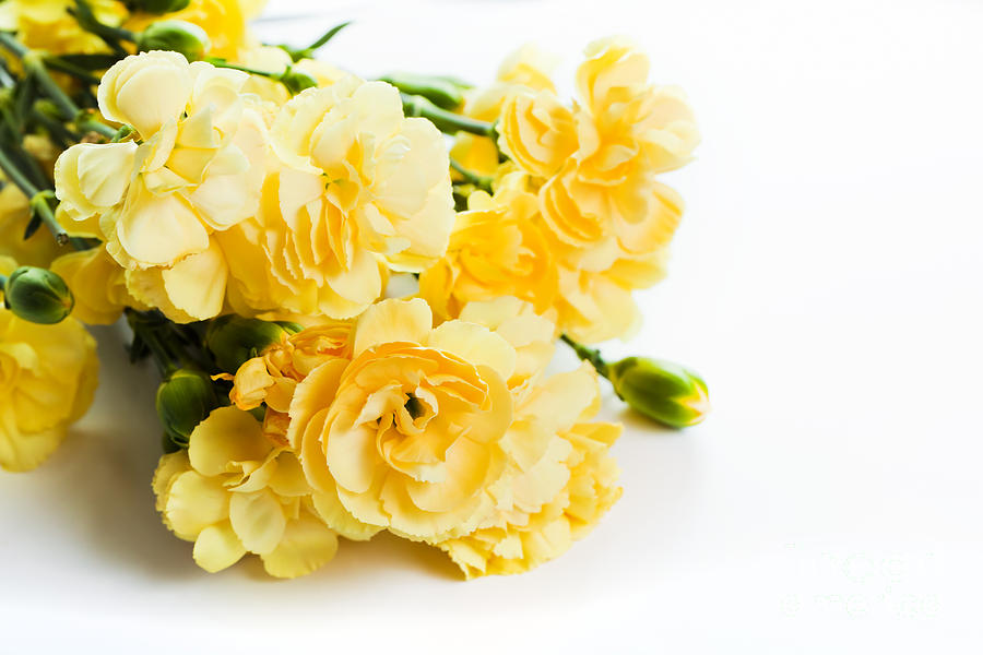 Yellow Soft Spring Flowers Bouquet On White Background Photograph by ...