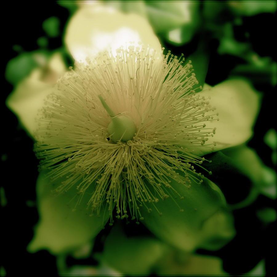 Flower Pyrography - Yellow Star by Tina Valvano