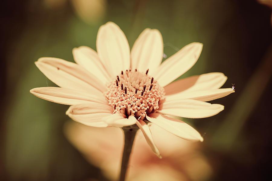 Yellow Photograph - Yellow sunflower by Maxwell Dziku