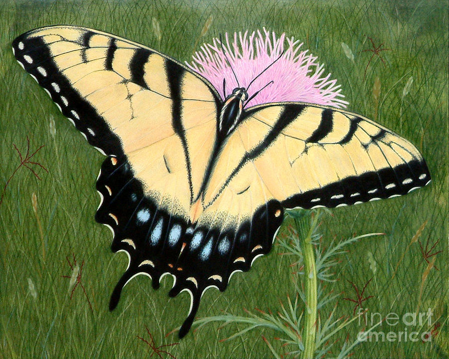 Butterfly Drawing - Yellow Swallowtail by Vivian Bound