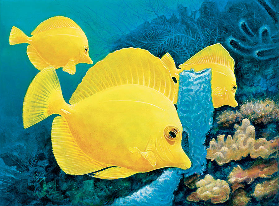 Yellow Tang Painting - Yellow Tangs by Durwood Coffey