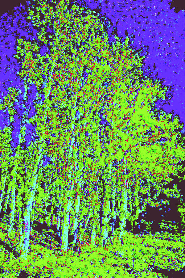 Yellow Trees D4 Digital Art by Modified Image