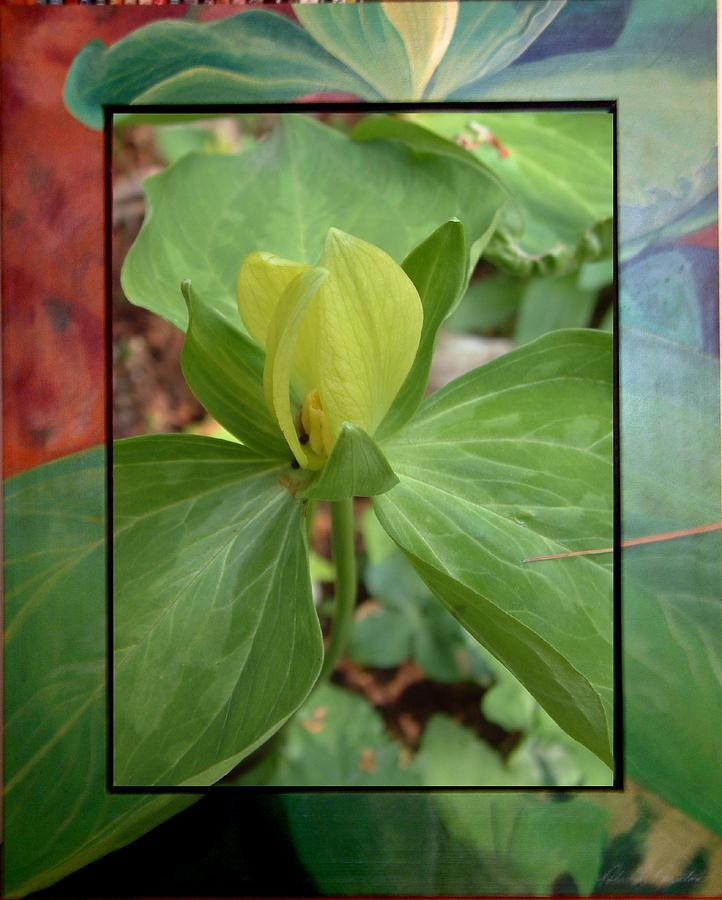 Wildflower Mixed Media - Yellow Trillium by Robert Boynton