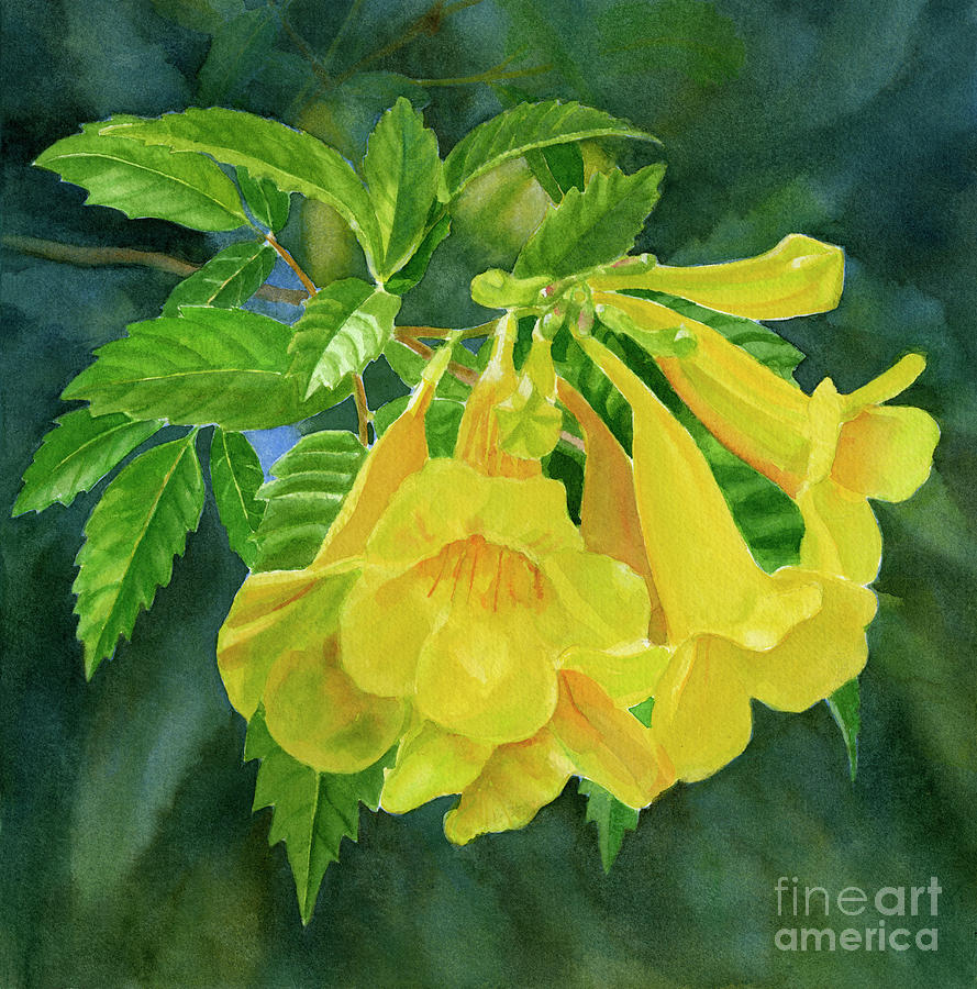 Yellow trumpet flowers with dark background painting by sharon freeman floral painting yellow trumpet flowers with dark background by sharon freeman mightylinksfo