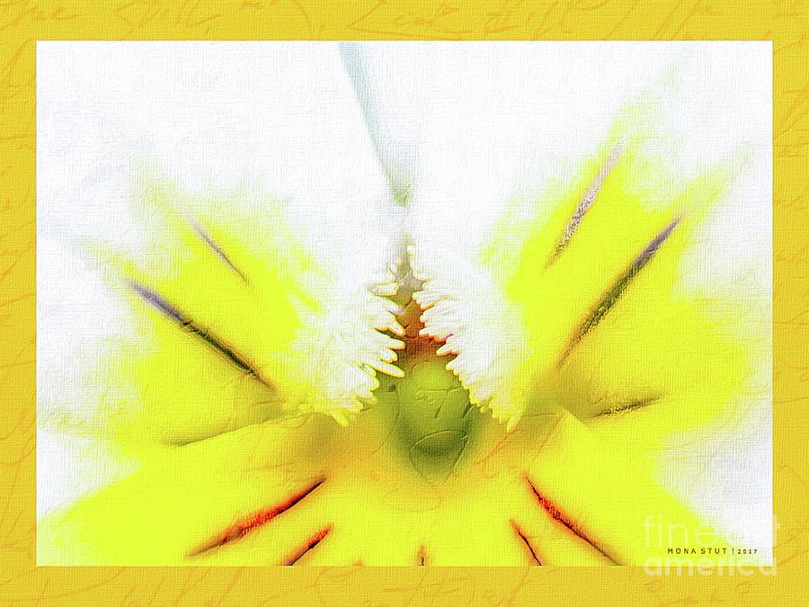 Viola Cornuta Horned Pansy Yellow Macro Photograph