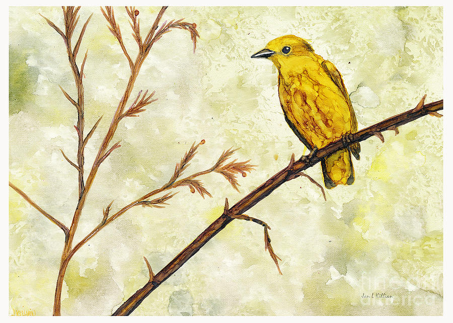 Yellow Warbler by Jan Killian