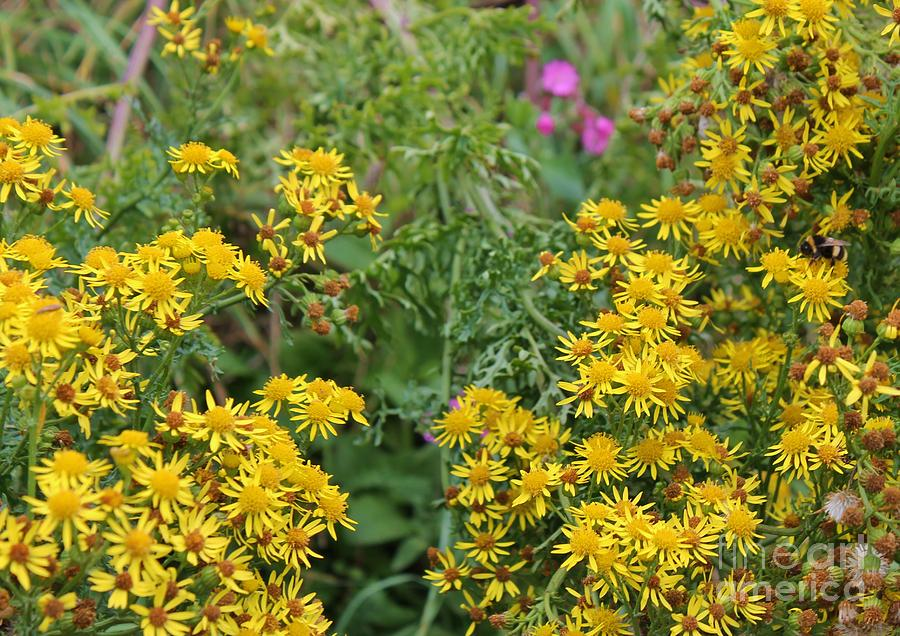 Yellow wildflowers wales photograph by karen desrosiers yellow photograph yellow wildflowers wales by karen desrosiers mightylinksfo