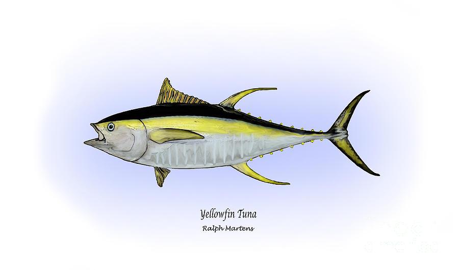 Yellowfin Tuna Painting - Yellowfin Tuna by Ralph Martens