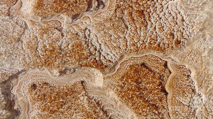 Yellowstone 2 Digital Art by Darcy Dietrich