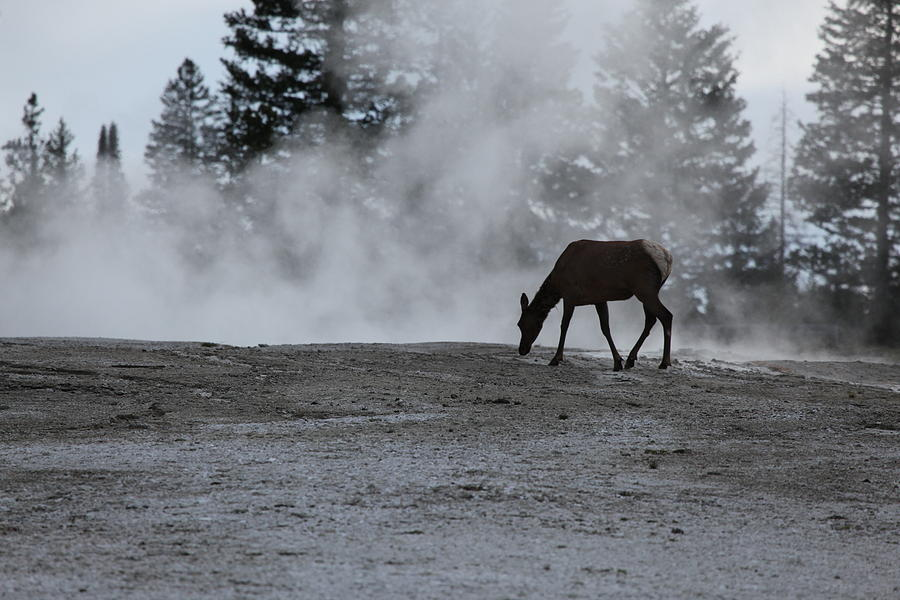 Yellowstone 5456 by Michael Fryd
