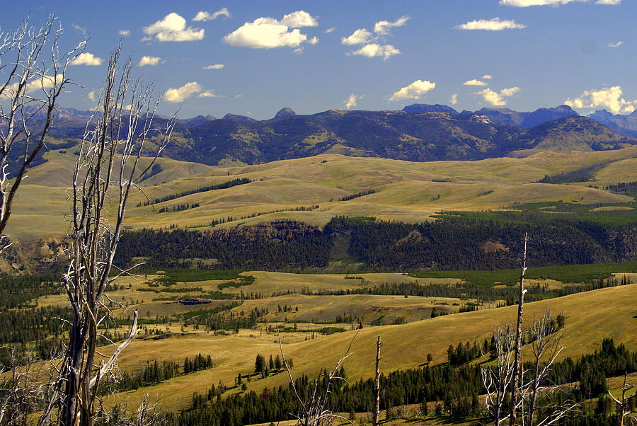 Yellowstone National Park Photograph - Yellowstone Landscape 2 by Marty Koch
