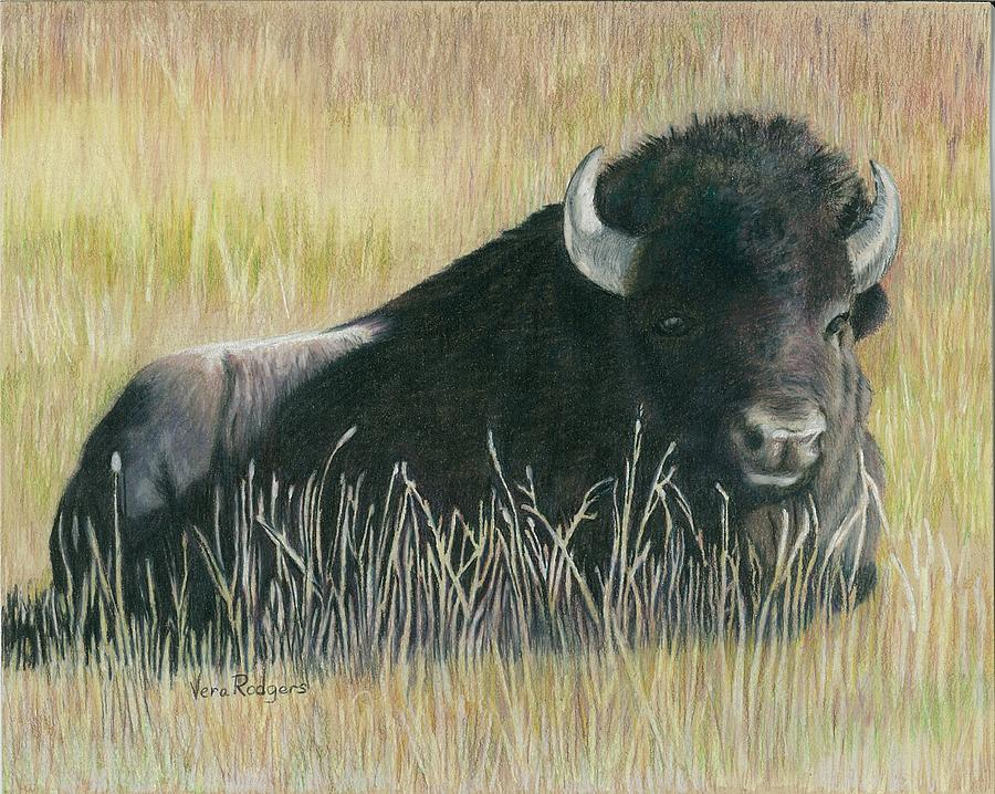 Bison Drawing - Yellowstone Loner by Vera Rodgers