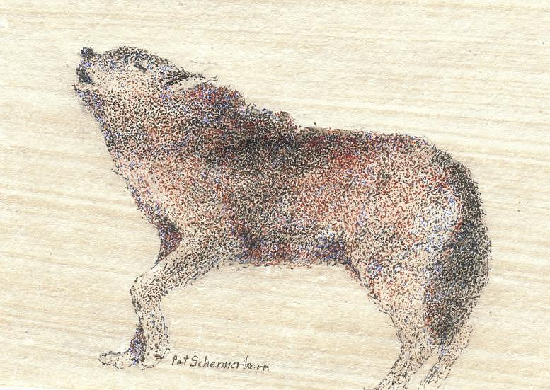 Wildlife Drawing - Yellowstone Wolf by Pat Schermerhorn