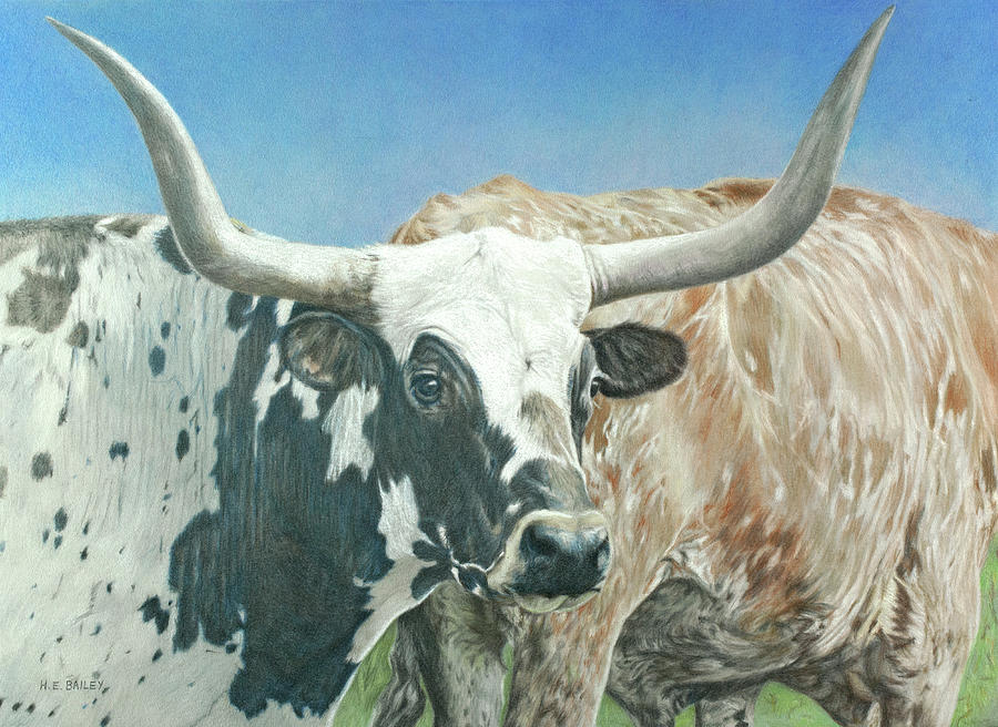 Longhorn Cattle Drawing - Yes, This Is Texas by Helen Bailey
