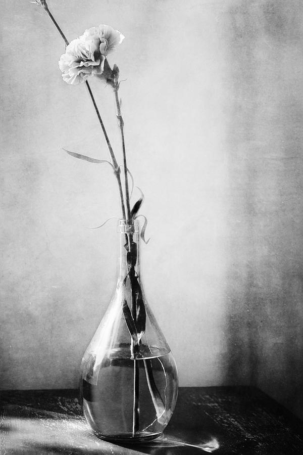 Black And White Carnation Photograph - Yesterday in Black and White by Lisa McStamp