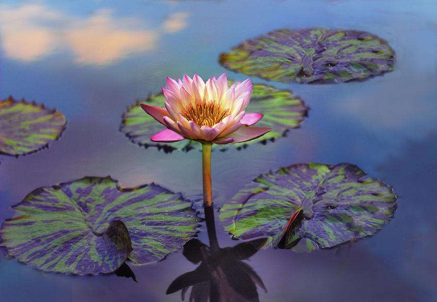 Lily Photograph - Singular Sensation  by Jessica Jenney