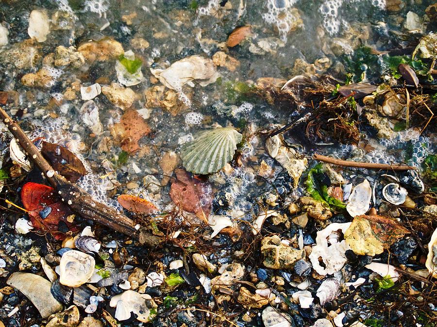 Shells Photograph - York Beach Shore by Lara Morrison