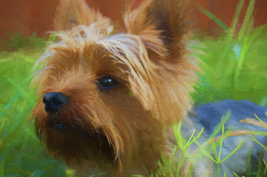 Painting Painting - Yorkie In The Grass - Painting by Ericamaxine Price