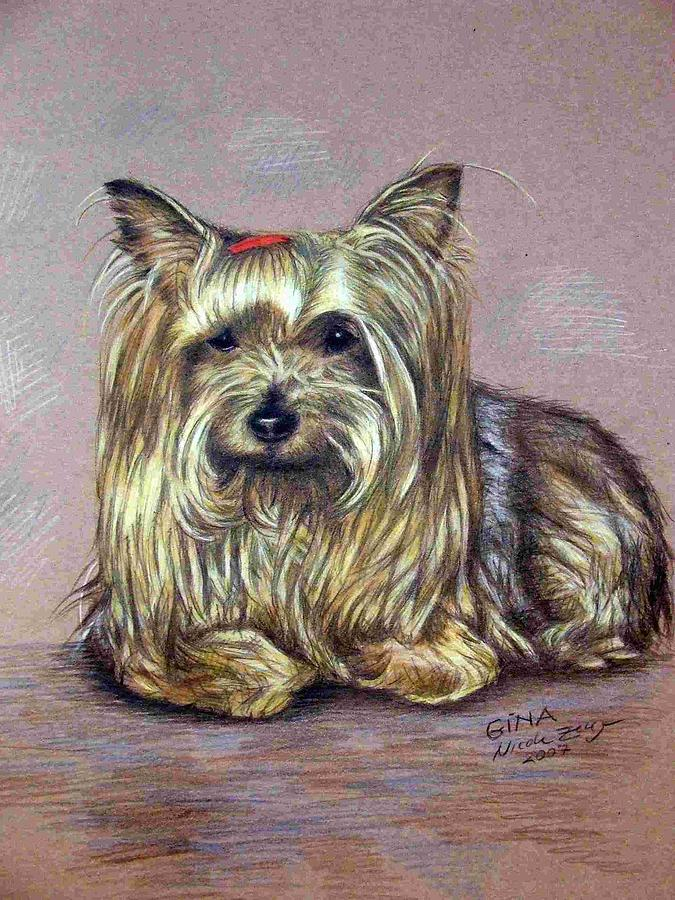 Dog Drawing - Yorkshire Terrier by Nicole Zeug