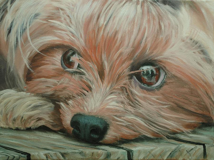 Oil Painting - Yorkshire Terrier by Nolan Clark